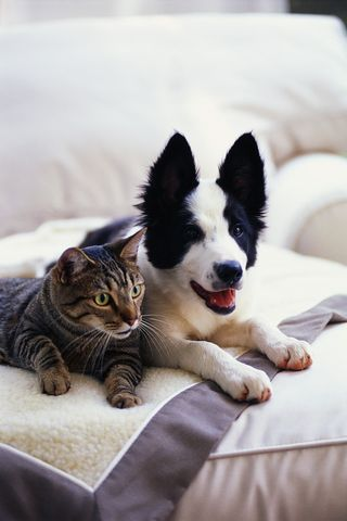 Blog picture-cat and dog
