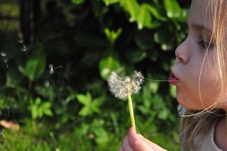 Child-dandelion